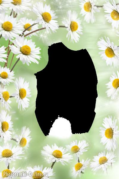 Цветы для рамки вставить фото